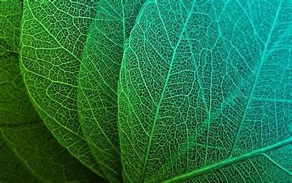 Leaves Wallpapers Macro Desktop 1080 1920 1800