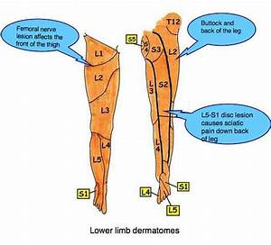 Leg Numbness Chiropractor With Pain And Tingling Warns The