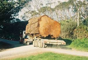 How Do You Finish 50,000 Year Old Kauri Wood