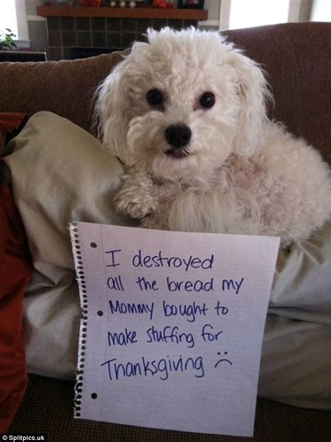 owners post   dogs   ruin thanksgiving