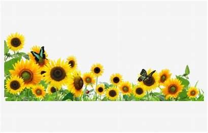 Sunflower Clipart Butterfly Sunflowers Butterflies Border Flowers