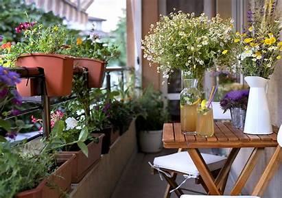 Balcony Garden Gardens Need Unsw Newsroom Why