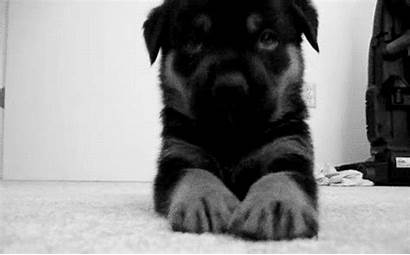 Puppy Gifs Dog Dogs Puppies Adorable Face