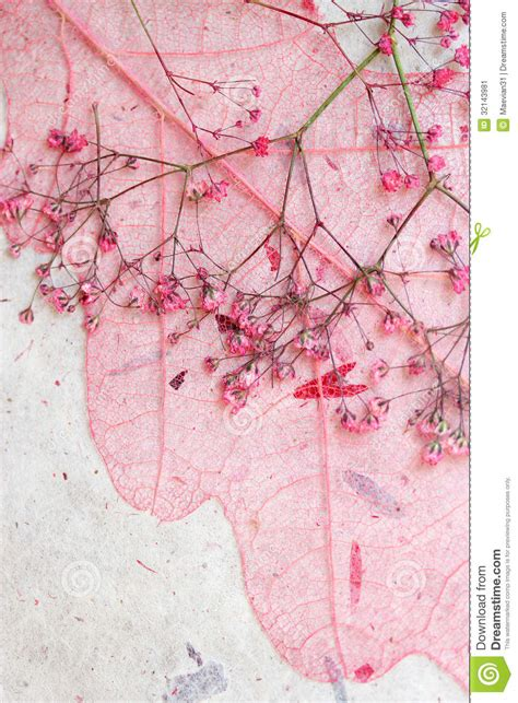 Dreamy Pink Leaf Background Stock Image