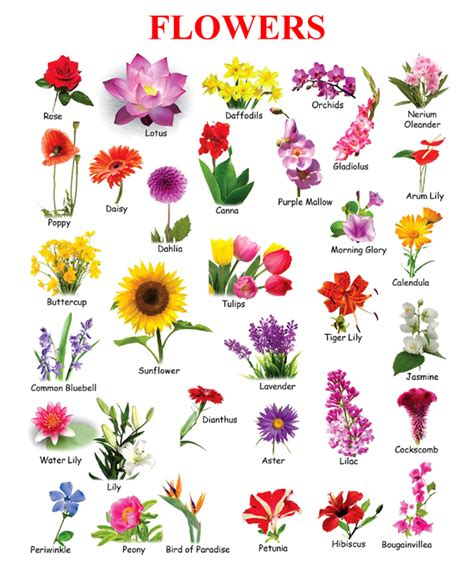 flowers names names and pictures of flowers flowers name chart southtracks mba degree info