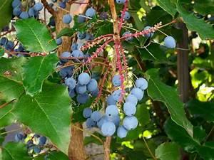 Garten Im Oktober : neues vom lindenhof der garten im oktober the garden in ~ Lizthompson.info Haus und Dekorationen