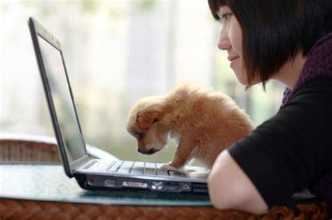 work  home jobs  dog lovers flexjobs
