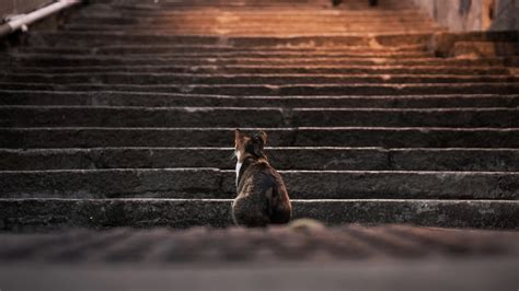 cat animals stairs depth  field steps wallpapers hd