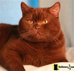 1000 images about cinnamon on cats