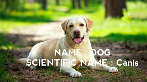 scientific names  animals scientific names
