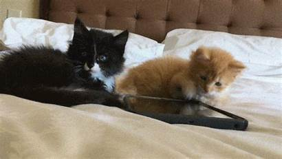 Kittens Kitten Cat Orange Tabby Tuxedo Those