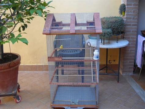 Riproduzione Canarini In Gabbia - gabbia o voliera cocorite e pappagallini ondulati
