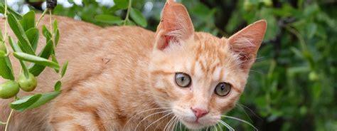 trockenfutter katzende