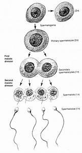 Хронический простатит и сиалиса - Спортивные гормоны