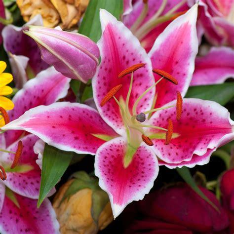 Fleur De Lys  366 Focales, Cadrages, Etc