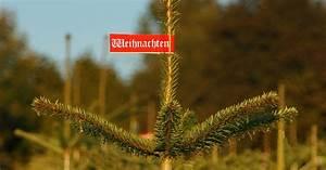 Weihnachtsbaum Richtig Schmücken : wohin mit dem alten weihnachtsbaum f nf tipps wie sie ihren weihnachtsbaum richtig entsorgen ~ Buech-reservation.com Haus und Dekorationen