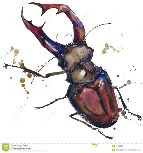 Stag Beetle Insect T shirt Graphics. Stag Beetle