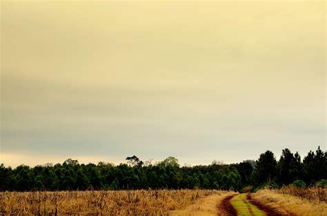 sunrise  green grass field  stock photo