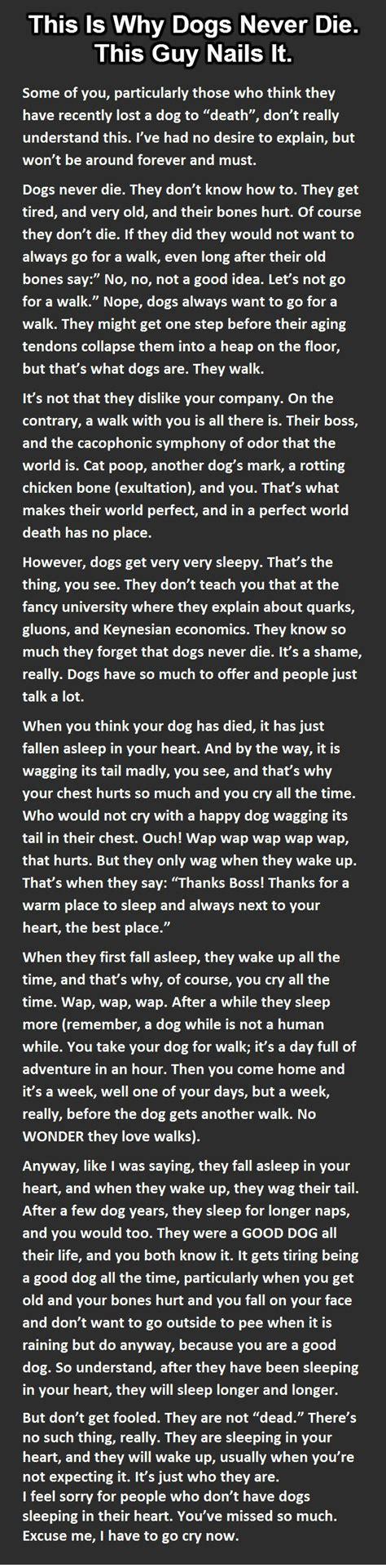 dog loss quotes ideas  pinterest dog loss