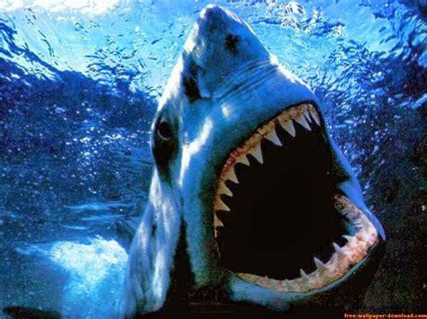 Aquatic Animals Wallpapers - aquatic wallpapers wallpaper keren