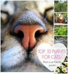 cat friendly plants 25 best ideas about cat garden on cat grass