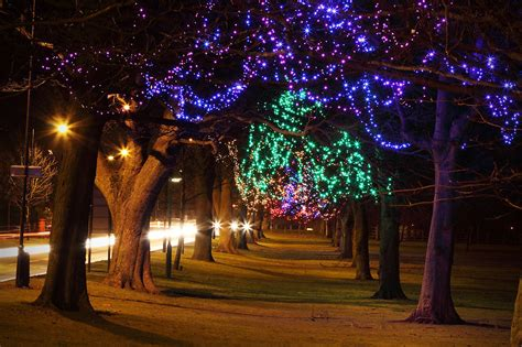 Lights Christmas  Free Stock Photo  Trees Decorated At