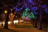Christmas Tree Lights at Night
