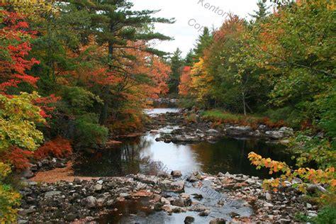 foliage of trees best foliage images on pinterest best landscape photography trees fall foliage images on