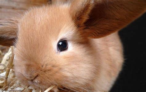 Garten Tierfreundlich Gestalten by Kaninchen Im Garten Kaninchen Im Garten Tiere View