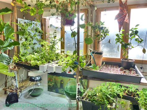 indoor vegetable garden lets invent  universe