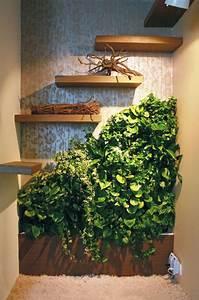 Zimmerpflanzen Für Dunkle Ecken : ber ideen zu pflegeleichte zimmerpflanzen auf ~ Michelbontemps.com Haus und Dekorationen