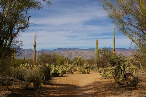 Where Rv Now? Saguaro Holidays