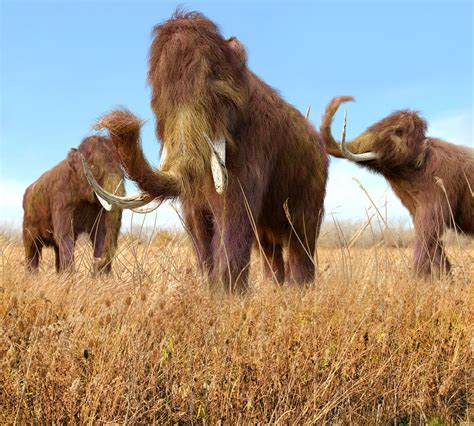 fascinating facts  woolly mammoths thatll blow