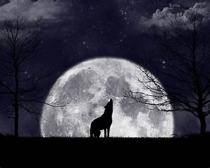 Howling Wolf Moon Wolves Wallpapers Zanardo Moons
