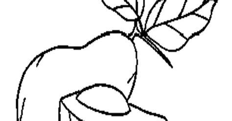 contoh gambar mewarnai buah alpukat
