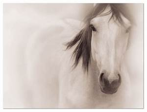 Horse Photography on Canvas • Large Wall Art - Traditional