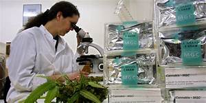 Medical Marijuana Clinical Trial Is A First For Canada