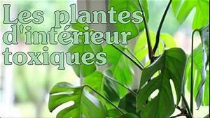 Plante D Intérieur Haute : les plantes d 39 int rieur toxiques youtube ~ Dode.kayakingforconservation.com Idées de Décoration