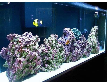 jual aksesoris aquarium  jakarta jual aquarium jakarta
