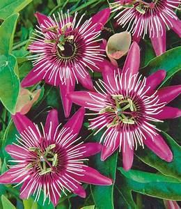 Schattenpflanzen Garten Winterhart : die besten 25 winterharte pflanzen ideen auf pinterest winterharte pflanzen f r balkon ~ Sanjose-hotels-ca.com Haus und Dekorationen