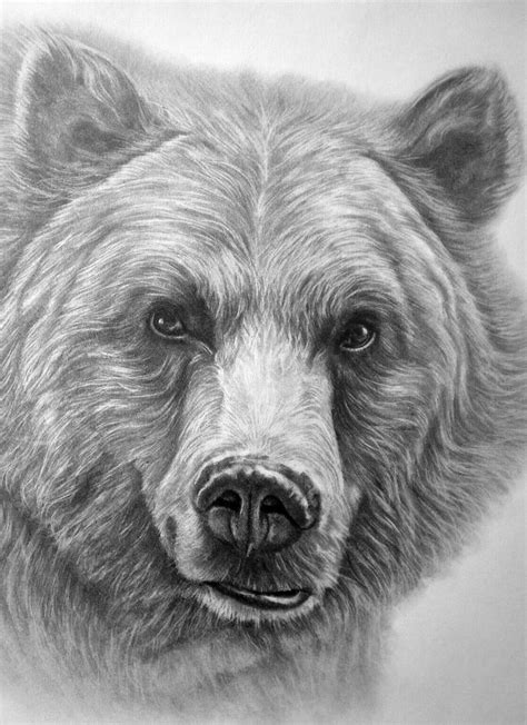 Beautiful Grizzly Bear Drawing! | Grizzly bear drawing, Pencil drawings of animals, Bear drawing