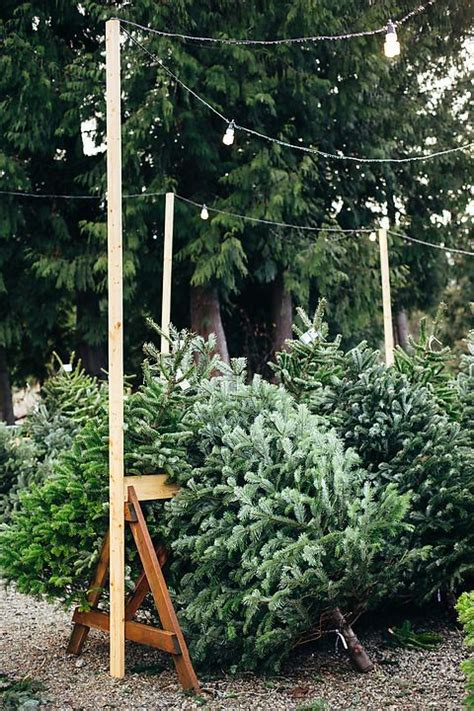 best christmas tree farm ri 17 best images about tree farm on trees the and pine