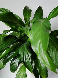 house plants pictures House plants | wellywoman