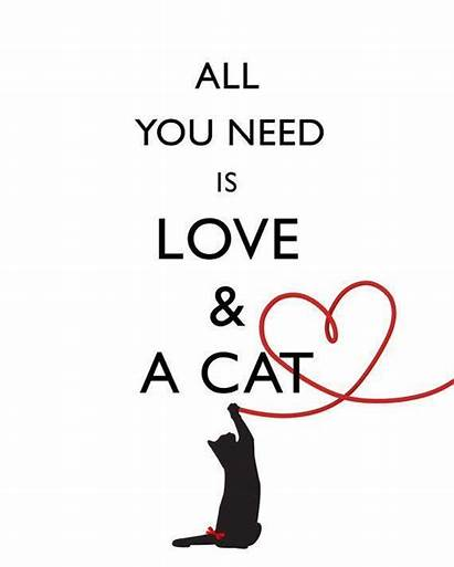 Cat Need Quotes Cats Quote Sayings Funny