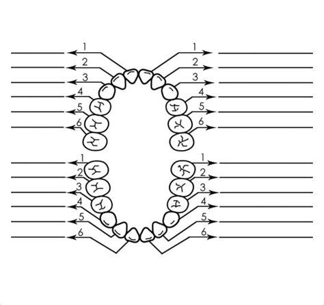 dental charting template 11 teeth chart templates sle templates