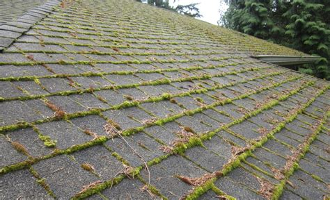 How To Keep Moss From Growing On Your Roof Midwest Roofing Supply Minneapolis Mn Estimator Salary Uk How To Cedar Shingle A Roof Ridge Owens Corning Warranty Claim Form Repair Old Mobile Home Fall Arrest Anchors Red Inn Plus Boston Logan Saugus Mid State Paso Robles