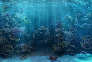 50+ Best Aquarium Backgrounds