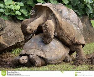 Galapagos Mates Stock Image Image 3848191