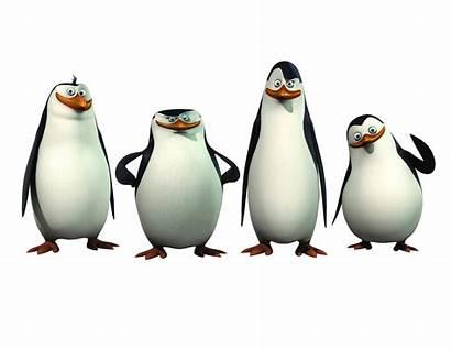 Madagascar Shrek Characters Cartoon
