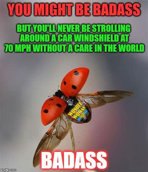 Bug Memes - ladybug imgflip